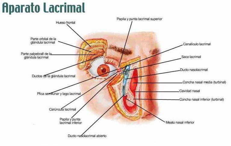 Anatomía del aparato lacrimal - Oftalmología - Venezuela - Dr. Alvaro Sanabria