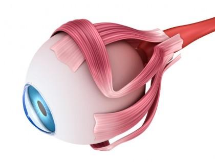 El ojo - Órgano fundamente de la visión - Oftalmología en Venezuela