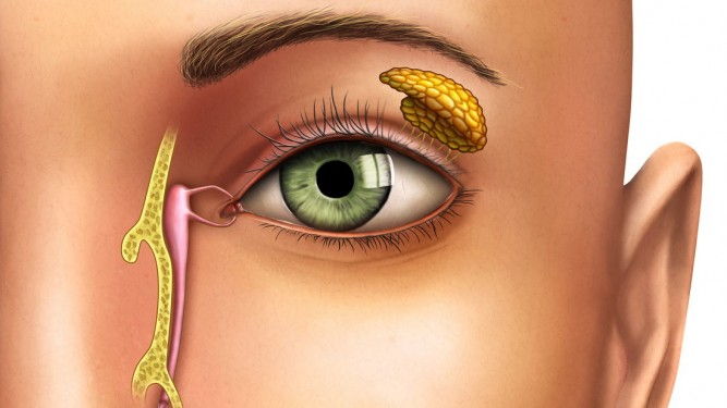Obstrucción de la vía lagrimal (OVL) - Oftalmología pediátrica